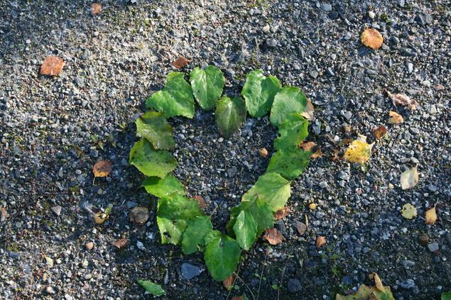 Hjerte i blader
