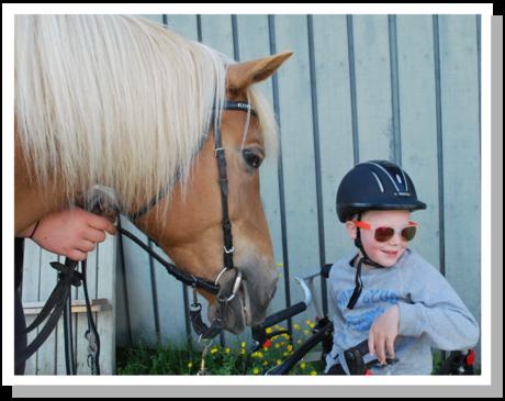 Hesten er et stort dyr, men også et tillittsfullt dyr.