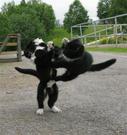 Bilde av kattene Pippin og Munti som lekesloss