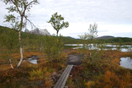 Delvis klopplagt sti går langs Hømmervatnet inn til bålplassen i innerenden.
