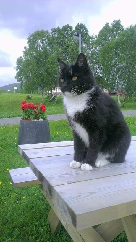 Katten Pippin